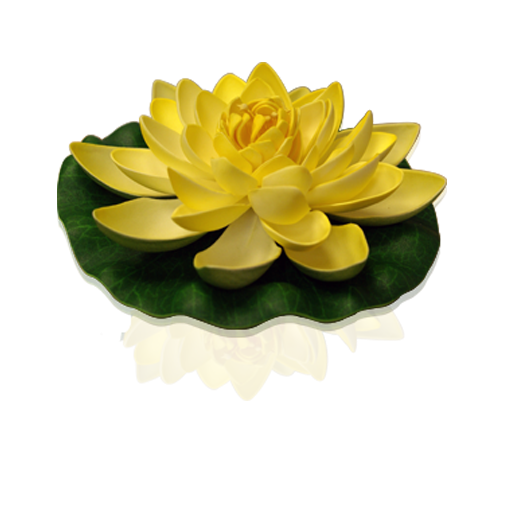 Yellow Lotus floating flower