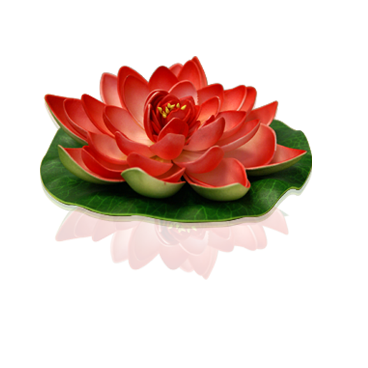 Red Lotus floating flower