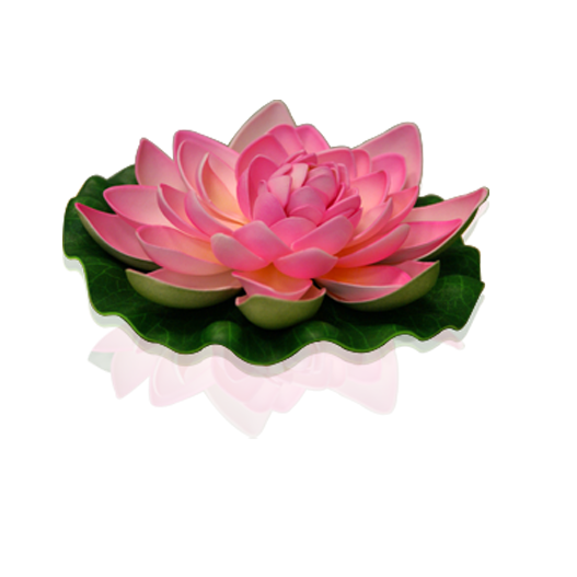 Pale Pink Lotus floating flower