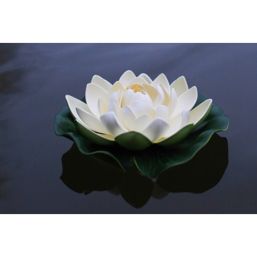 Lotus Natural Blanche