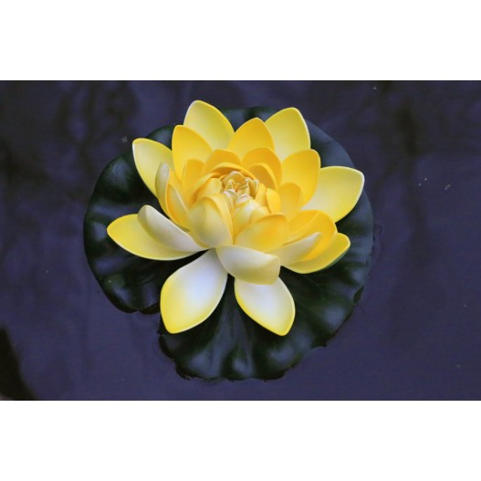 Lotus Natural Jaune
