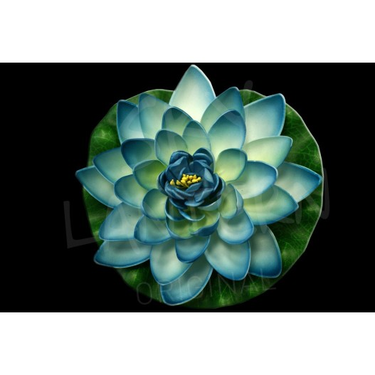 Turquoise Lotus floating flower